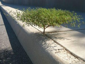 cute-bonsai-tree-sidewalk