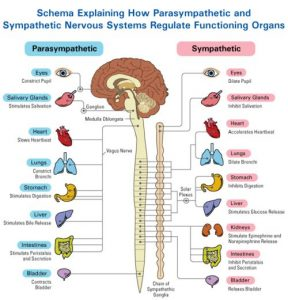 Vagus Nerve Yoga