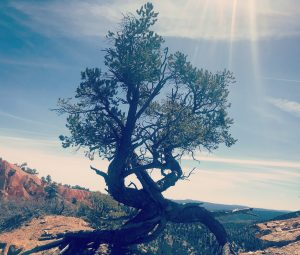 Death, Rebirth, and Self-Discovery Dr. Arielle Schwartz