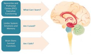 Vagus Nerve Disorders