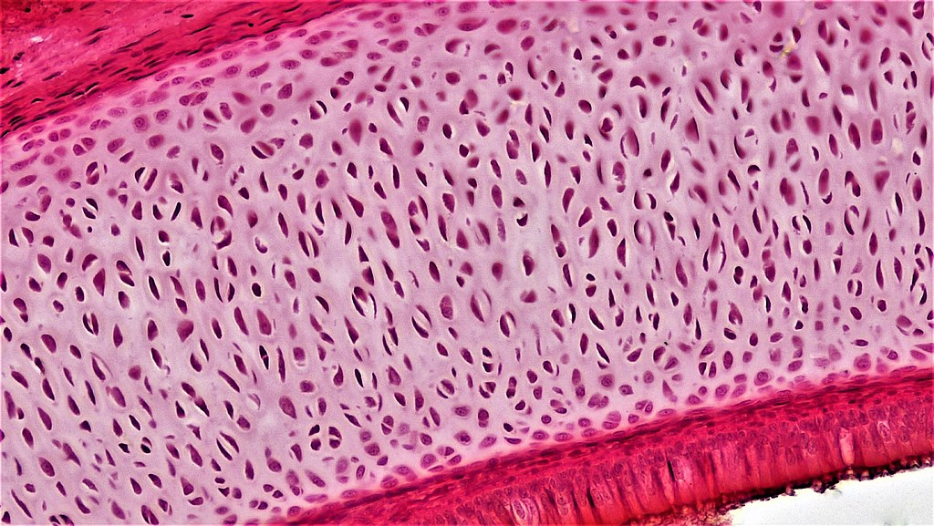 Fascia and your Vagus Nerve Dr. Arielle Schwartz
